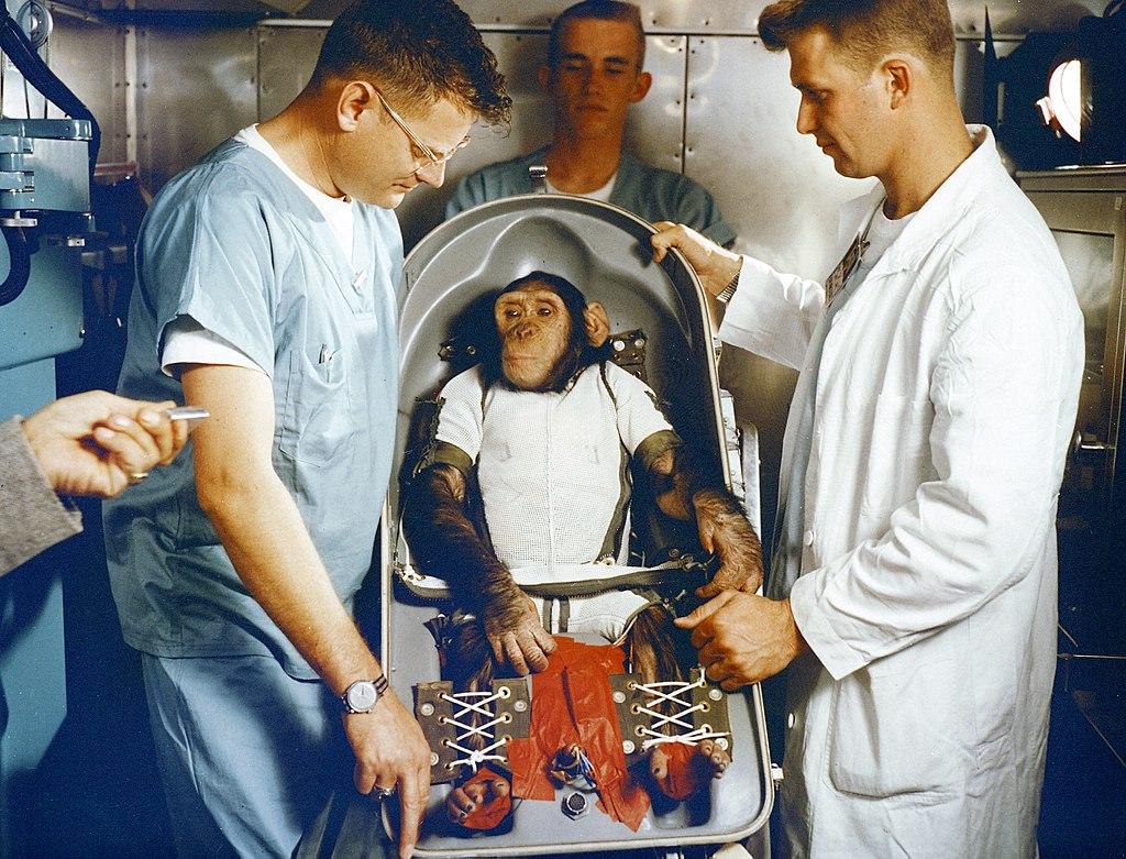 Ludzie jak małpy